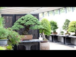 Bonsai Empire: Crespi Bonsai Museum