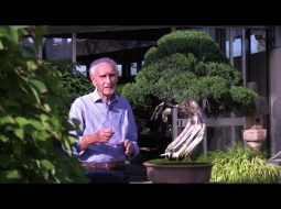 Art Grand Tour: Crespi Bonsai Museum