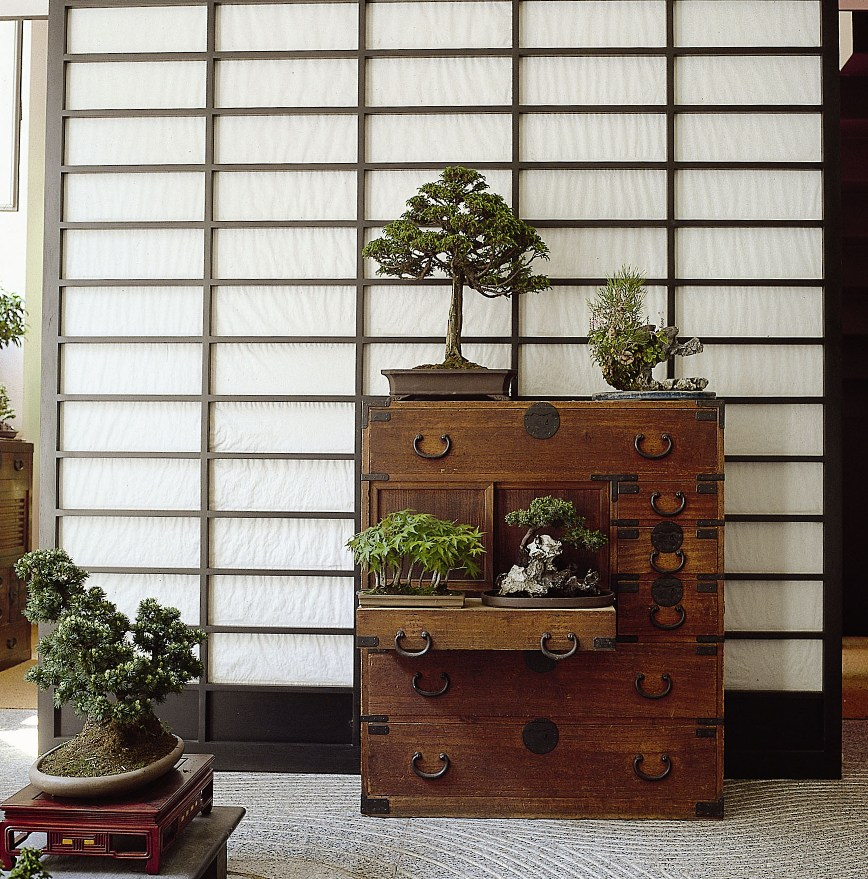 CRESPI BONSAI Milano LOW_2.jpg