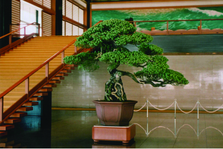 I bonsai dell'imperatore