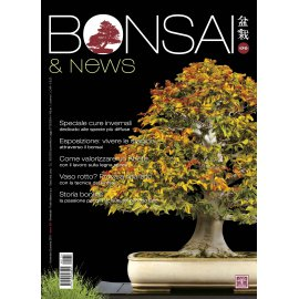 BONSAI & NEWS 170 -  NOV-DIC 2018