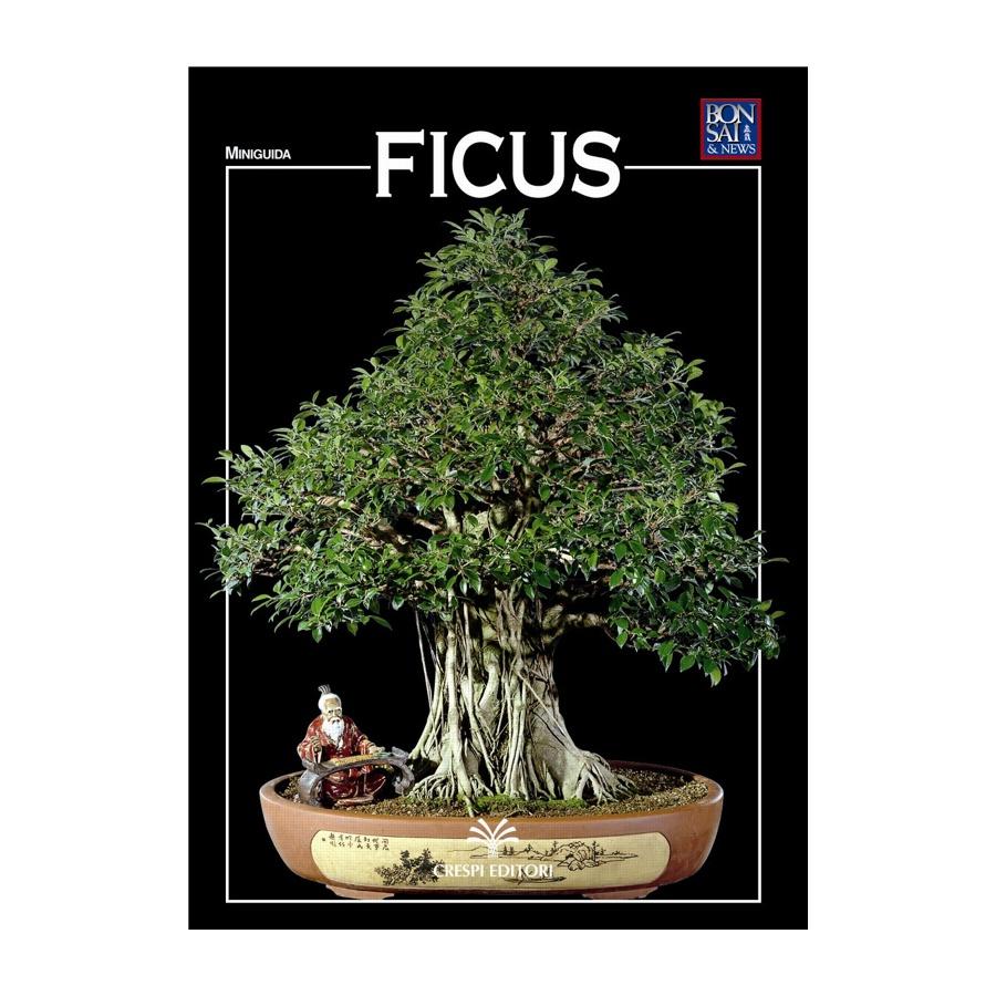 MINIGUIDA - Ficus