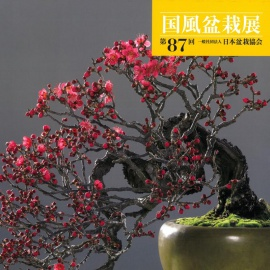CATALOGO KOKUFU 87 BONSAI EXHIBITION - Anno 2013