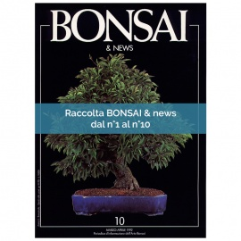 RACCOLTA BONSAI & NEWS DAL 1 AL 10