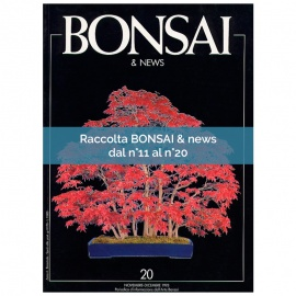 RACCOLTA BONSAI & NEWS DAL 11 AL 20