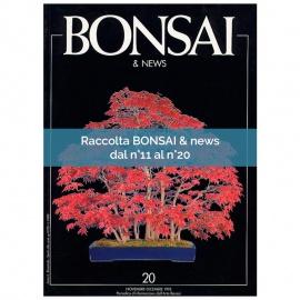 RACCOLTA BONSAI & NEWS DAL 11 AL 20