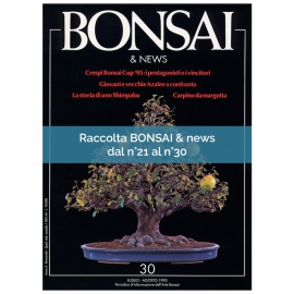 RACCOLTA BONSAI & NEWS DAL 21 AL 30