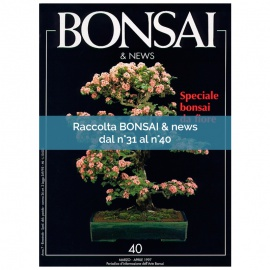 RACCOLTA BONSAI & NEWS DAL 31 AL 40