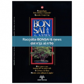 RACCOLTA BONSAI & NEWS DAL 51 AL 60
