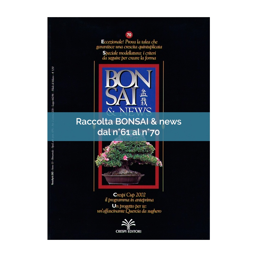 RACCOLTA BONSAI & NEWS DAL 61 AL 70