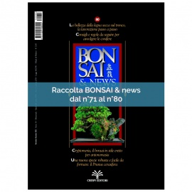 RACCOLTA BONSAI & NEWS DAL 71 AL 80