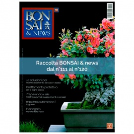 RACCOLTA BONSAI & NEWS DAL 111 AL 120