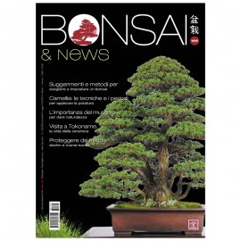 BONSAI & NEWS 164 - NOV-DIC 2017