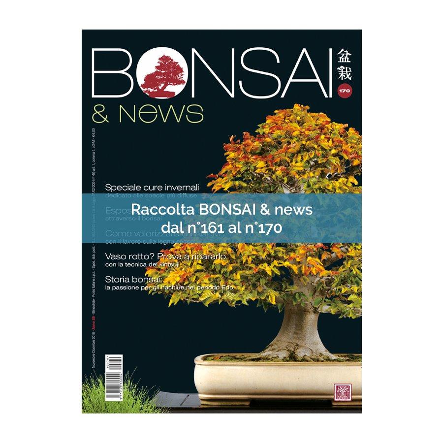 RACCOLTA BONSAI & NEWS DAL 161 AL 170