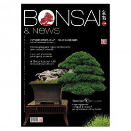 BONSAI & NEWS 176 -  NOV-DIC 2019