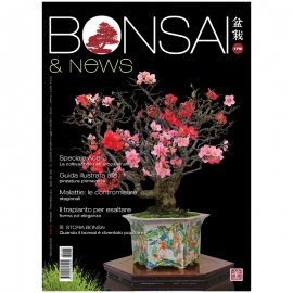BONSAI & NEWS 177 -  GEN-FEB 2020