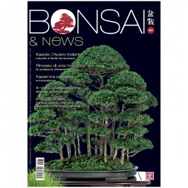 BONSAI & NEWS 181 -  SETT-OTT 2020