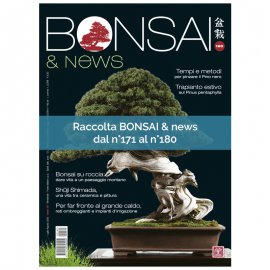RACCOLTA BONSAI & NEWS DAL 171 AL 180