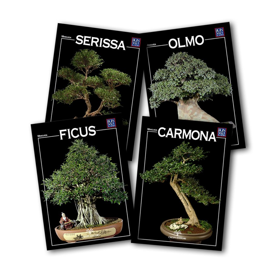 4 MINIGUIDE Serie Bonsai da Interno