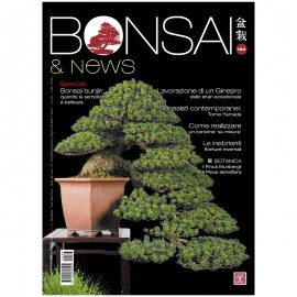 BONSAI & NEWS 183 -  GENN-FEBB 2021