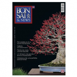BONSAI & NEWS 140 - NOV-DIC 2013